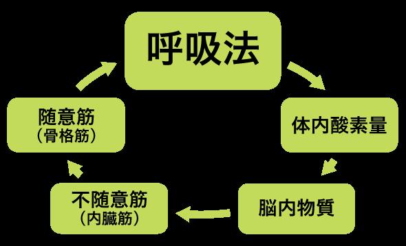 呼吸法メカニズム図