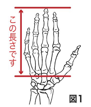 手の骨格図