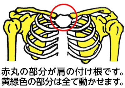 肩の付け根