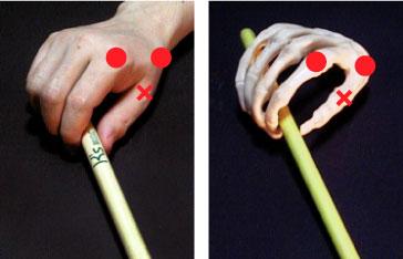 親指根元関節(手) 親指根元関節(骨)