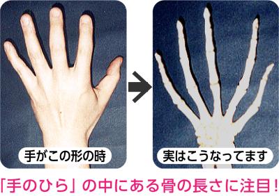 手のひらの中にある骨の長さ