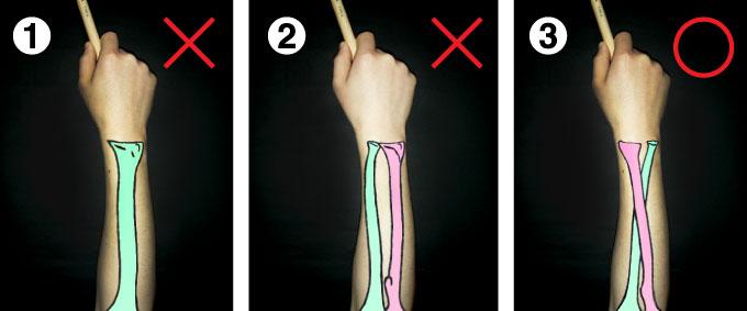 骨が一本の前腕 骨が平行な前腕 骨が交差している前腕